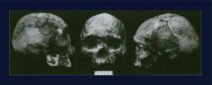 manusia prasejarah