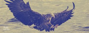 maskot kota jakarta: elang bondol